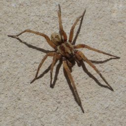 Уничтожение пауков в Тимашевске